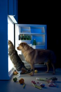 Hungry Dog and Cat