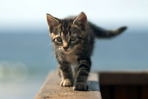 Kitten On Ledge