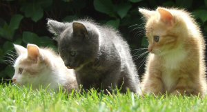 Kittens In Grass