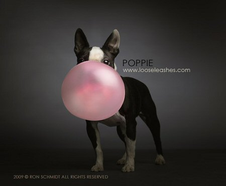 Poppie Blowing Bubble